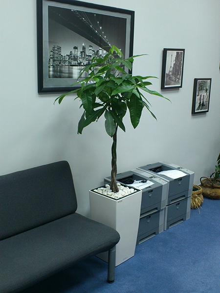 Dekorativne saksije, Biodekoracija enterijera, Saksijske biljke, Cvetni aranž...